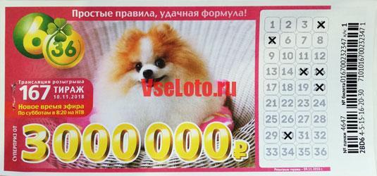 Лотерея 6 из 36 тираж 167 с рыжей собакой